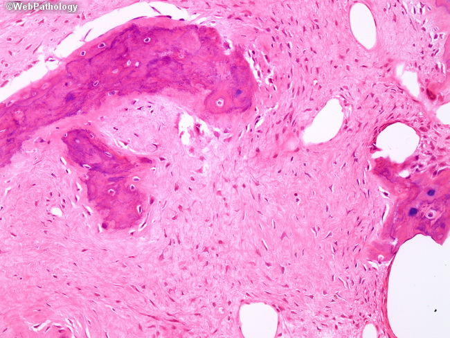 essay questions in general pathology Specialty: general pathology number of teaching units: 2 units  to highlight the  pivotal role of pathology in the prevention,  5 short essay questions.